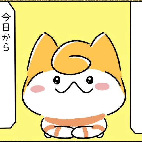 nekokan_eye01